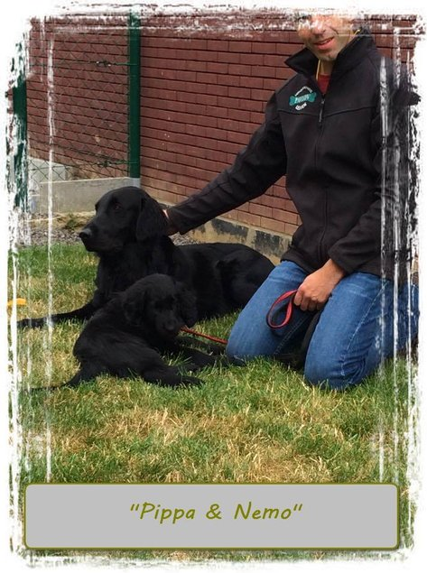 Flatcoated Retriever puppy fokker